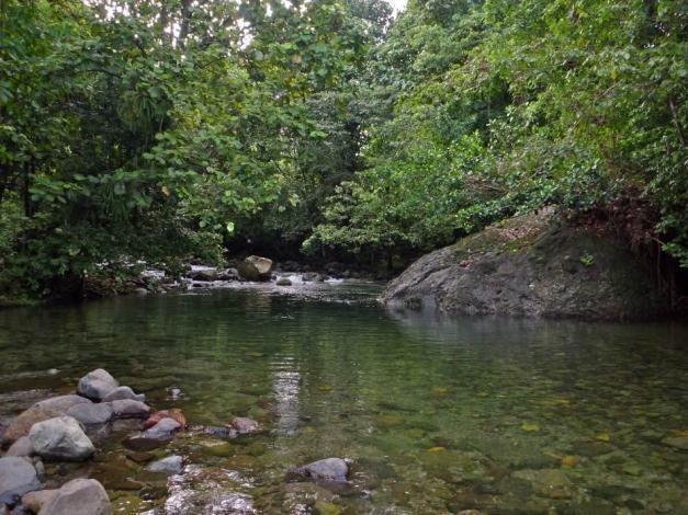 Domenica_Rainforest6.jpg