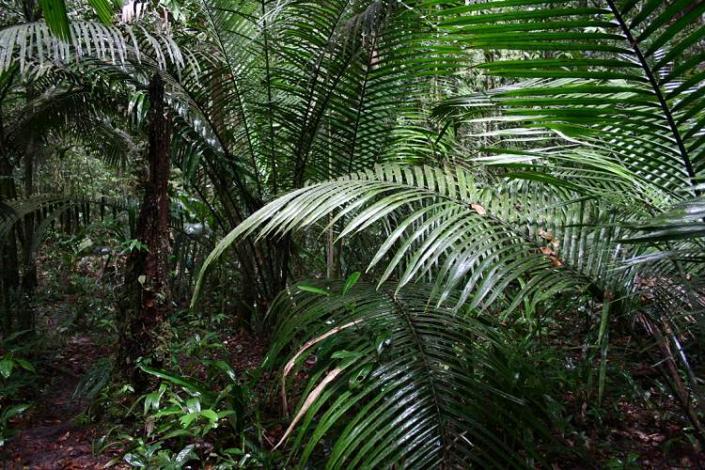 Boa constrictor Habitat Brasilien