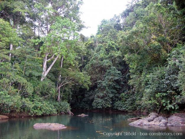 Boa Constrictor Habitat Costa Rica