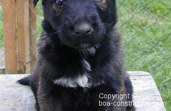 Unser Hund Lux