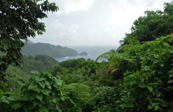 Domenica_Rainforest3.jpg