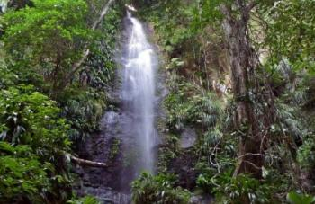 Domenica_Rainforest4.jpg