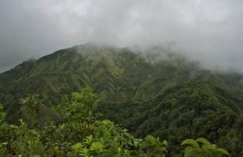 Domenica_Rainforest7.jpg