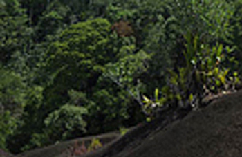 Boa constrictor Habitat Surinam