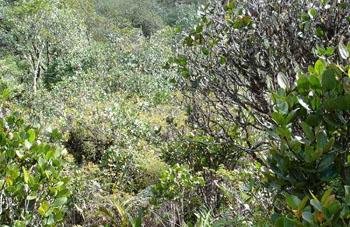 Boa constrictor Habitat Venezuela - Gran Sabana